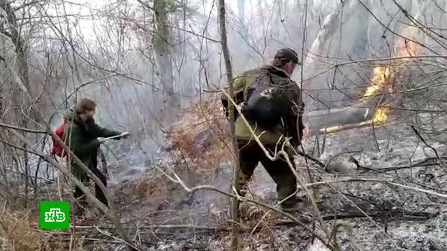 В Сочи потушили загоревшийся из-за фейерверков лес.Сочи, лесные пожары, пиротехника.НТВ.Ru: новости, видео, программы телеканала НТВ