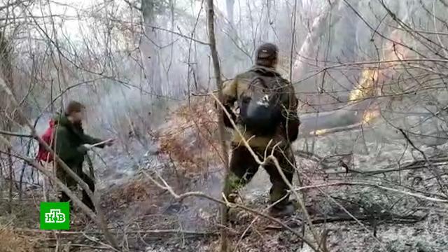 Подозреваемые вподжогах леса жители Сочи задержаны.Абхазия, Краснодарский край, Сочи, задержание, лесные пожары.НТВ.Ru: новости, видео, программы телеканала НТВ