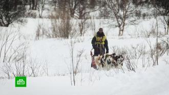 Заслуженные каюры решили бойкотировать гонку на собачьих упряжках «Берингия»