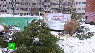 Петербуржцев приглашают на елочную утилизацию