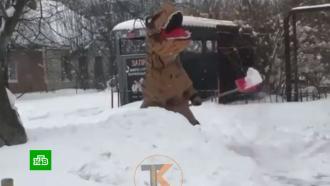 Жители Кубани после снегопада толкают маршрутки ичистят дороги вкостюмах динозавров