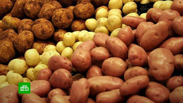 На российских прилавках появится картофель «экономкласса».магазины, сельское хозяйство, тарифы и цены, экономика и бизнес.НТВ.Ru: новости, видео, программы телеканала НТВ