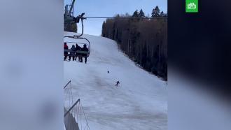 Медведь погнался за туристом на горнолыжном курорте
