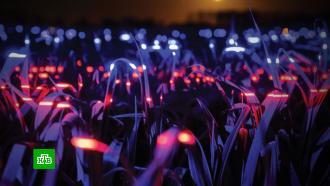 ВНидерландах поле <nobr>лука-порея</nobr> превратили всветовую инсталляцию