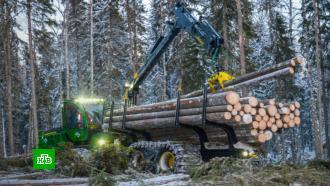 В Минпромторге рассказали, как будут развивать лесозаготовку в России