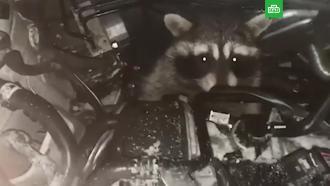 Енот захватил машину каршеринга вмосковском аэропорту