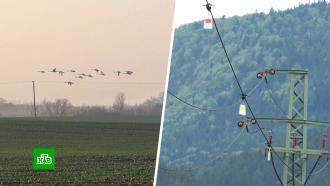 ВСловакии перелетных птиц спасают спомощью дронов