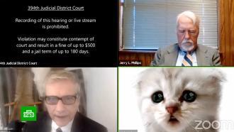 Адвокат не разобрался с фильтрами и на онлайн-заседании предстал в образе котенка