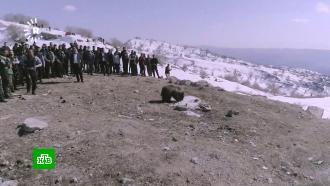 ВИраке медведей выпустили на свободу после реабилитации: видео