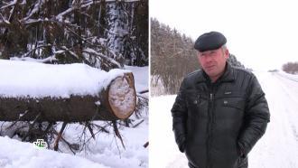 Валежник бывает разный: как не угодить в тюрьму за сбор упавших деревьев.НТВ.Ru: новости, видео, программы телеканала НТВ