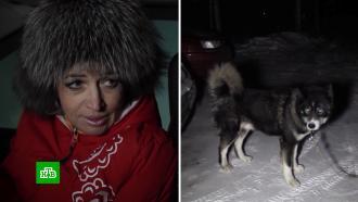 «Вызвал ГАИ, чтобы наказать»: житель Миасса отомстил обидчице за сбитую собаку