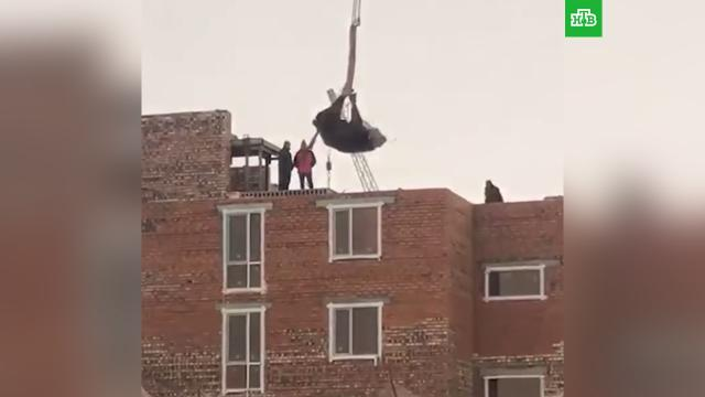 Строители подвесили корову вверх копытами и подняли на крышу дома.животные, Казахстан.НТВ.Ru: новости, видео, программы телеканала НТВ