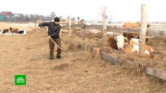 Карантинная зона на границе сКитаем осложнила жизнь амурских фермеров