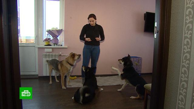 Звериные нормативы: Кировская область первая вРоссии ввела квоты на домашних животных
