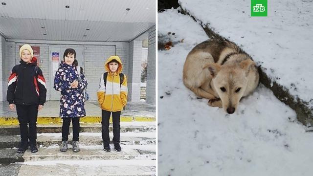 Согревали куртками: российские школьники спасли от холода бездомного щенка.Краснодарский край, волонтеры, дети и подростки, собаки, школы.НТВ.Ru: новости, видео, программы телеканала НТВ