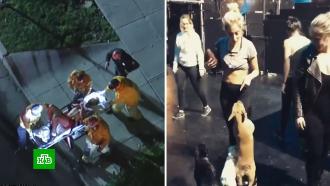 Впохищении собак Леди Гаги усмотрели политические мотивы