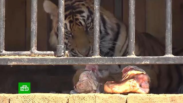 Более 70пострадавших от <nobr>COVID-19</nobr> цирков изоопарков получили помощь от государства