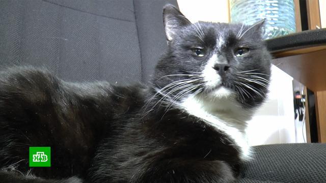 Красивые и полезные животные: в России отмечают День кошек.Сегодня в России отмечают День кошек. По данным статистики, сейчас в нашей стране в домашних условиях проживают почти 34 миллиона этих животных. По этому показателю мы занимаем 3-е место в мире. В честь кошек у нас устанавливают памятники и открывают музеи. А еще питомцев упоминают в детских сказках и даже в законопроектах.животные, кошки, торжества и праздники.НТВ.Ru: новости, видео, программы телеканала НТВ