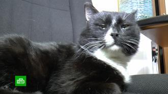 Красивые иполезные животные: вРоссии отмечают День кошек