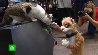 В Петербурге начали окультуривать котов