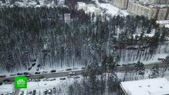 В Петербурге спорят из-за парковки у онкоцентра, ради которой могут вырубить лес.Несколько гектаров леса в поселке Песочный планируют вырубить ради стоянки. Парковка необходима пациентам динамично развивающегося онкокластера. Пока же стихийная стоянка варварски захватывает несколько километров обочины вдоль дороги.Санкт-Петербург, автомобили, онкологические заболевания, парковка.НТВ.Ru: новости, видео, программы телеканала НТВ