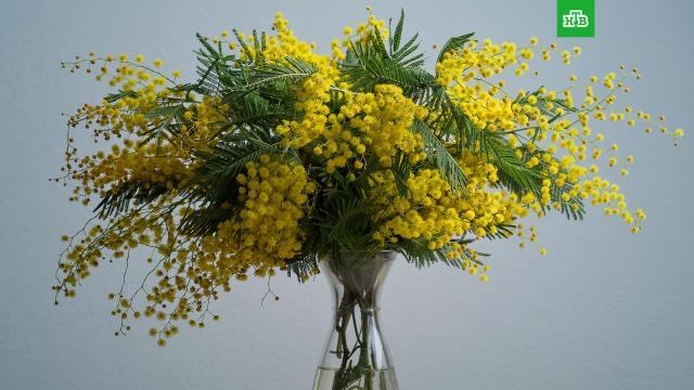 Какие цветы не стоит дарить женщинам 8 Марта: советы врачей.Медики советуют в подарок на 8 Марта выбирать цветы без запаха, а также отказаться от мимозы, так как она может спровоцировать аллергию.подарки, торжества и праздники, цветы.НТВ.Ru: новости, видео, программы телеканала НТВ