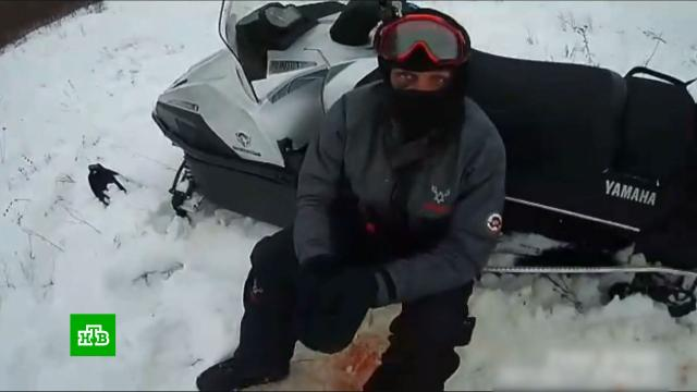 Сотрудник ГИБДД с товарищами давили косуль на снегоходах.ГИБДД, Саратовская область, браконьерство, жестокость, животные, охота и рыбалка, полиция.НТВ.Ru: новости, видео, программы телеканала НТВ