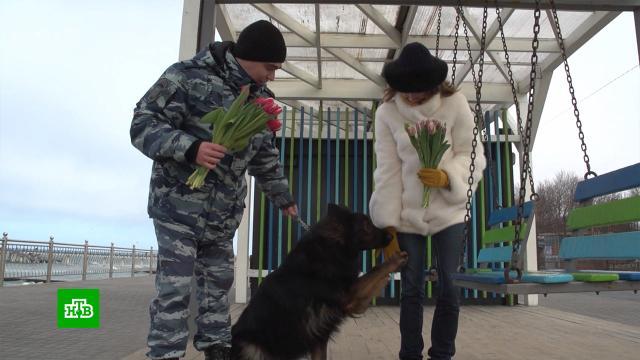 ВКалининграде женщин с8Марта поздравили кинологи ссобаками.8 Марта, МКС, женщины, торжества и праздники.НТВ.Ru: новости, видео, программы телеканала НТВ