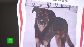 Посты, объявления ихитроумные ловушки: как волонтеры разыскивают пропавших собак