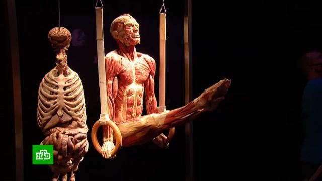Когда-то были живыми: в Москве открывается выставка пластинатов.ВДНХ, Москва, выставки и музеи, здоровье, искусство, медицина, наука и открытия.НТВ.Ru: новости, видео, программы телеканала НТВ