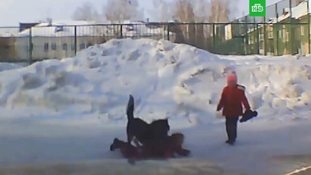 Бродячая собака напала на ребенка вНовосибирске.Новосибирск, дети и подростки, нападения, расследование, собаки.НТВ.Ru: новости, видео, программы телеканала НТВ