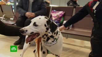 Собаки из приюта поднимают настроение пассажирам красноярского аэропорта