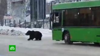 Сбежавшего от хозяина медведя поймали вНижневартовске