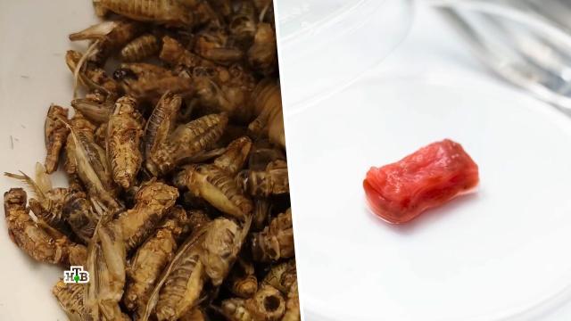 Хлеб из тараканов и мясо из воздуха: зачем человечество подсаживают на суррогат.еда, продукты.НТВ.Ru: новости, видео, программы телеканала НТВ