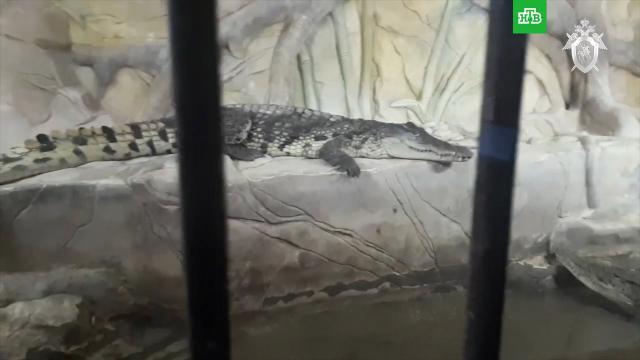 СК показал крокодилов и медведей устроившего стрельбу Барданова.Московская область, животные, оружие, стрельба.НТВ.Ru: новости, видео, программы телеканала НТВ