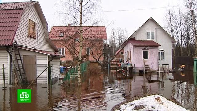 Петербургское садоводство оказалось под водой <nobr>из-за</nobr> разлившейся реки