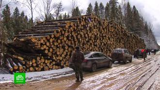 Лесозаготовителей будут штрафовать за порчу дорог в Ленобласти
