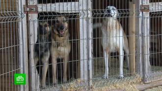 ВЛенобласти хозяев для бездомных собак будут искать спомощью МФЦ