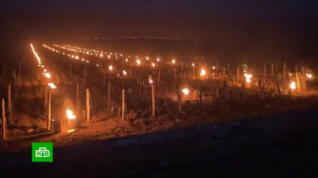 Во Франции спасают виноградники от весенних заморозков с помощью вертолетов.Франция, морозы, погодные аномалии, сельское хозяйство.НТВ.Ru: новости, видео, программы телеканала НТВ