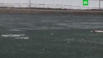 Москвич утонул, пытаясь спасти свою собаку