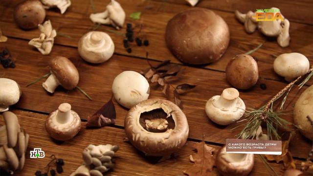 Скакого возраста грибы можно безопасно включать врацион детей.НТВ.Ru: новости, видео, программы телеканала НТВ