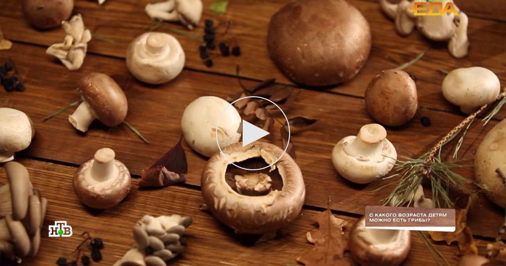 Скакого возраста грибы можно безопасно включать врацион детей