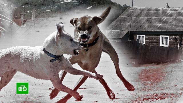 Растерзавшие ребенка собаки терроризировали башкирское село смарта.Башкирия, дети и подростки, собаки.НТВ.Ru: новости, видео, программы телеканала НТВ