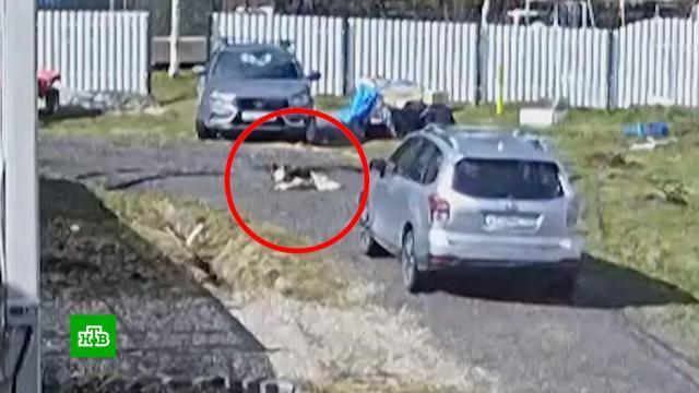 Уличная камера сняла, как живодер раздавил автомобилем собаку.Владимирская область, Интернет, животные, соцсети.НТВ.Ru: новости, видео, программы телеканала НТВ