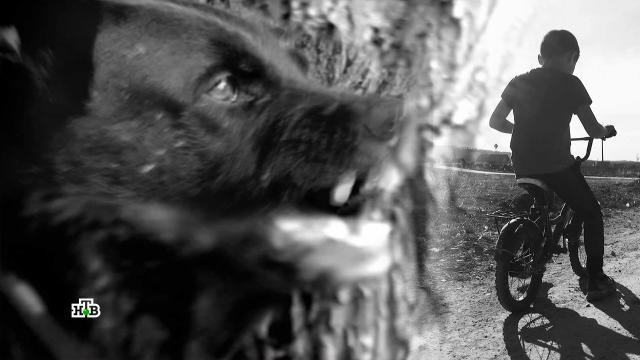 Бродячие псы атакуют: как собака становится врагом человека.нападения, расследование, смерть, собаки, суды, Волгоград.НТВ.Ru: новости, видео, программы телеканала НТВ