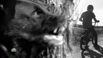 Бродячие псы атакуют: как собака становится врагом человека.НТВ.Ru: новости, видео, программы телеканала НТВ
