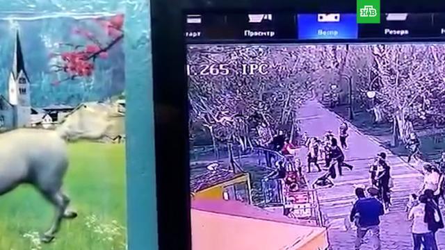 Восемь детей пострадали из-за поломки карусели вказахстанском Уральске.Казахстан, дети и подростки, несчастные случаи.НТВ.Ru: новости, видео, программы телеканала НТВ