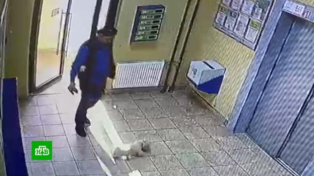 Установлена личность петербуржца, который избил одну собаку другой.Санкт-Петербург, волонтеры, жестокость, животные, издевательства, расследование.НТВ.Ru: новости, видео, программы телеканала НТВ