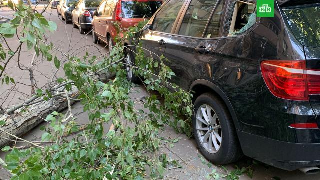 Ураган в Москве повалил 15 деревьев и повредил 5 машин.В столице из-за сильного ветра упали 15 деревьев, поэтому теперь по некоторым улицам не ходят трамваи.Москва, весна, погода, штормы и ураганы.НТВ.Ru: новости, видео, программы телеканала НТВ