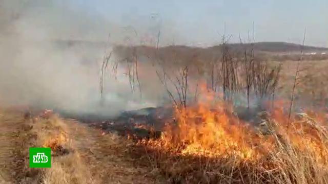 ВТюменской области лесной пожар уничтожил 25домов.МЧС, Тюменская область, лесные пожары, пожары.НТВ.Ru: новости, видео, программы телеканала НТВ